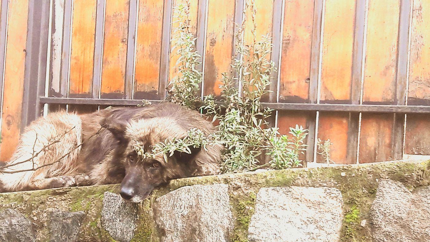 La fidelidad hecha animal! Perro Dog❤ Kiltro Relaxing Afterrain Taking Photos Flojera Valparaiso, Chile