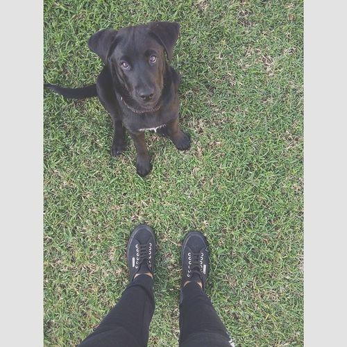 I miss you Milo 🐶😢 Dog Love Puppy Love Superga Instaselfie Throwback