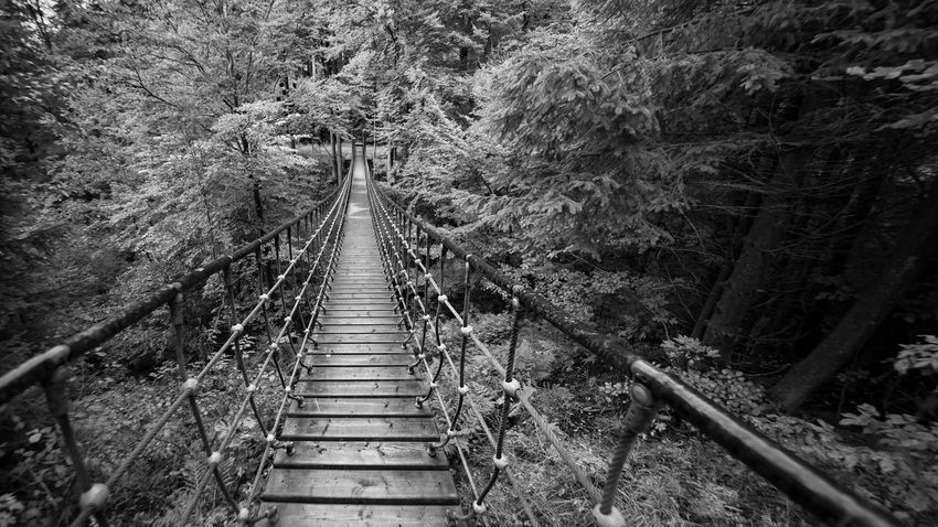 Rope bridge in the forest monochrome Excursion Go Rothaarsteig Sauerland Schmallenberg Wood Wooden Bridge Adventure Bridge Cable Stayed Bridge Connection Footbridge Forest Forest Monochrome Nature No People Outdoors Railing Railroad Track Rope Bridge Scenics The Way Forward Tree Way
