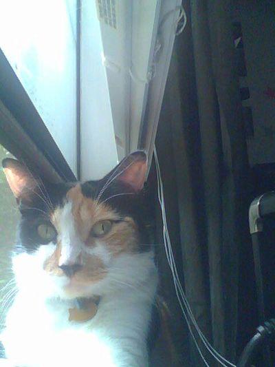 Cat Catoftheday Snapcat Ff via www.getsnapc.at