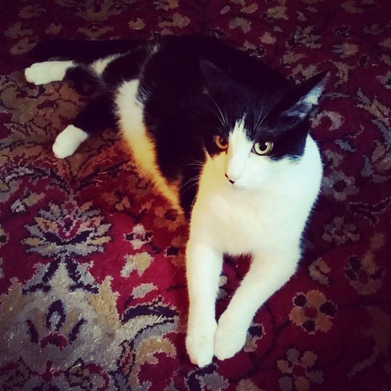 Cats Catsofinstagram Themingming Familiar blackandwhitecats lazycatdaze