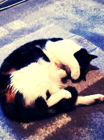 Cat One Animal Close-up Pets Relaxation Mo I Rana Gruben
