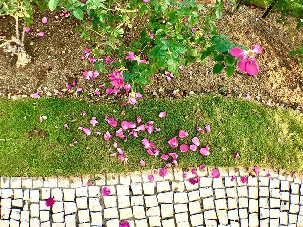 ハウステンボス 花 Flower