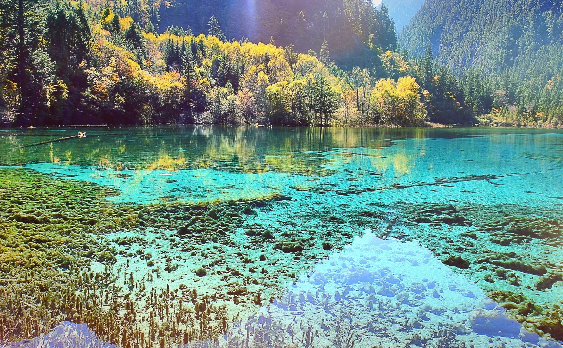 My father took this photo. Oct.21st~Oct.23rd 九寨沟 Jiuzhaigou Valley Scenic And Historic Interest Area 2014