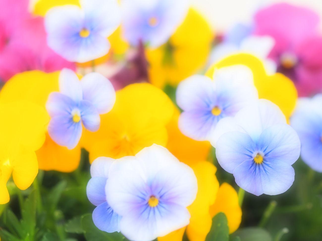 EyeEm EyeEm Best Edits EyeEm Best Shots EyeEm Gallery EyeEm Nature Lover EyeEmBestPics EyeEmFlower Flower Flower Collection Flower Head Flower Photography Flowerporn Flowers