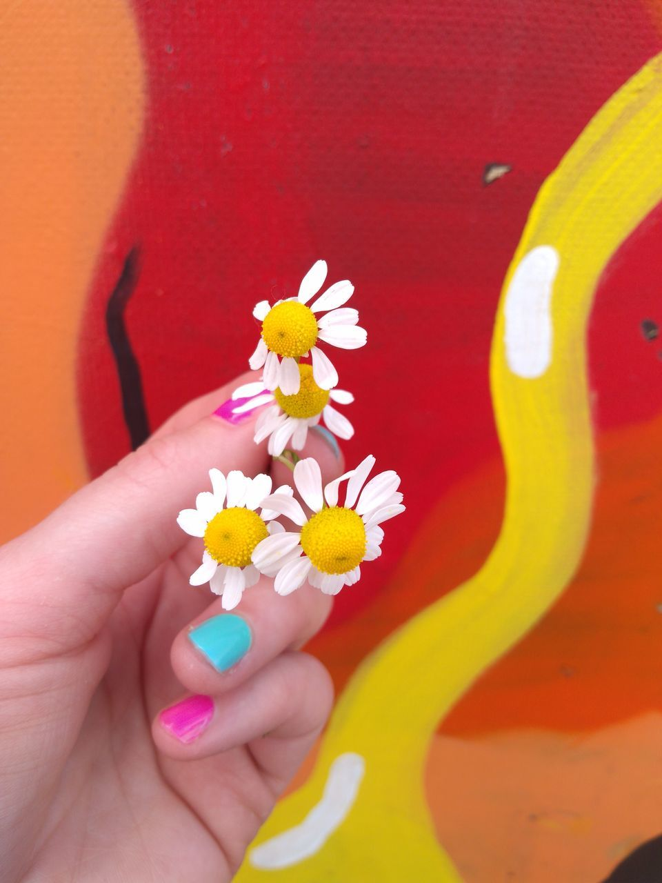 flower, real people, petal, one person, freshness, human hand, flower head, fragility, human body part, close-up, multi colored, yellow, holding, women, day, outdoors, nature, beauty in nature, people