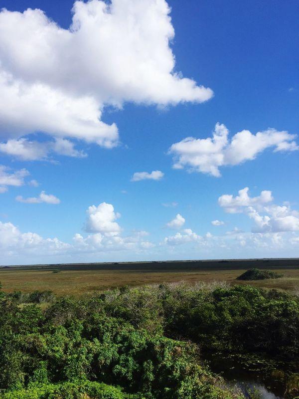 Shark Valley Observation Tower Everglades