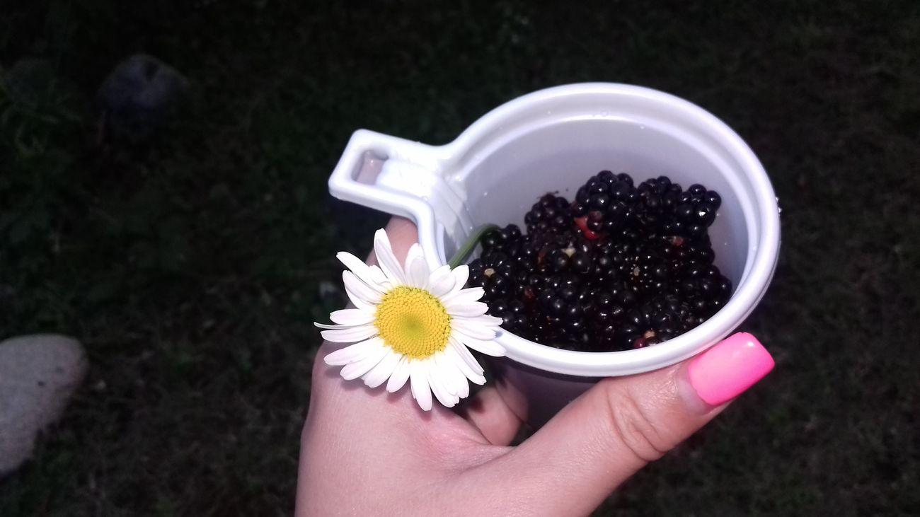 ежевика ромашка коктейль лето Природа