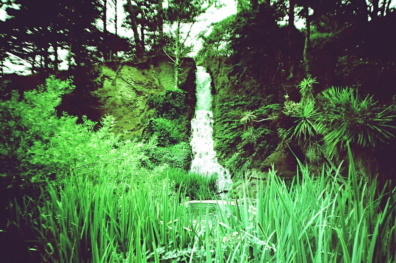 Nature Green Color Xpro Film Beauty In Nature Waterfall Film Film Photography Koduckgirl