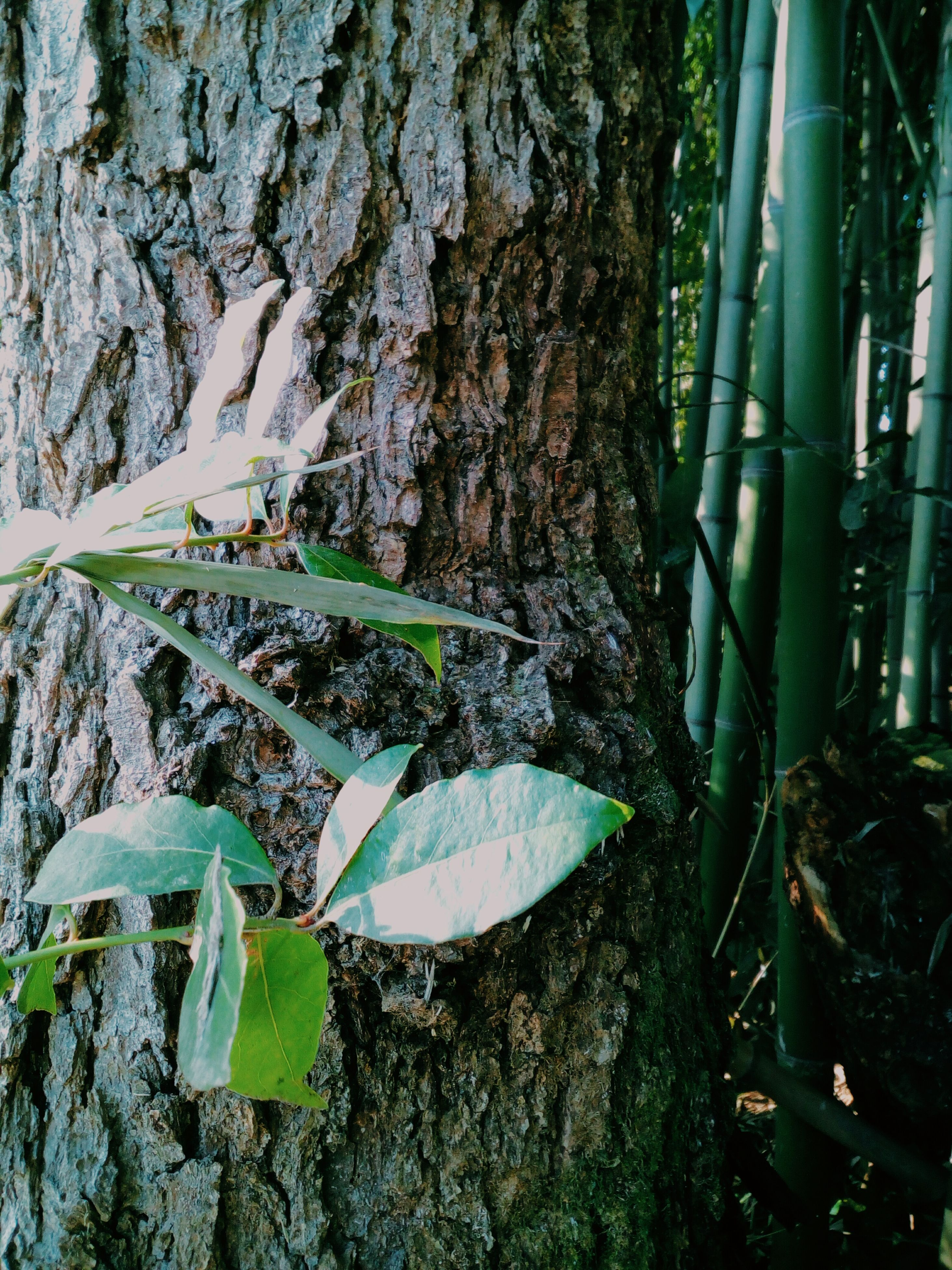 growth, nature, plant, leaf, no people, tree, beauty in nature, tranquility, day, outdoors, green color, water, fragility, freshness, close-up