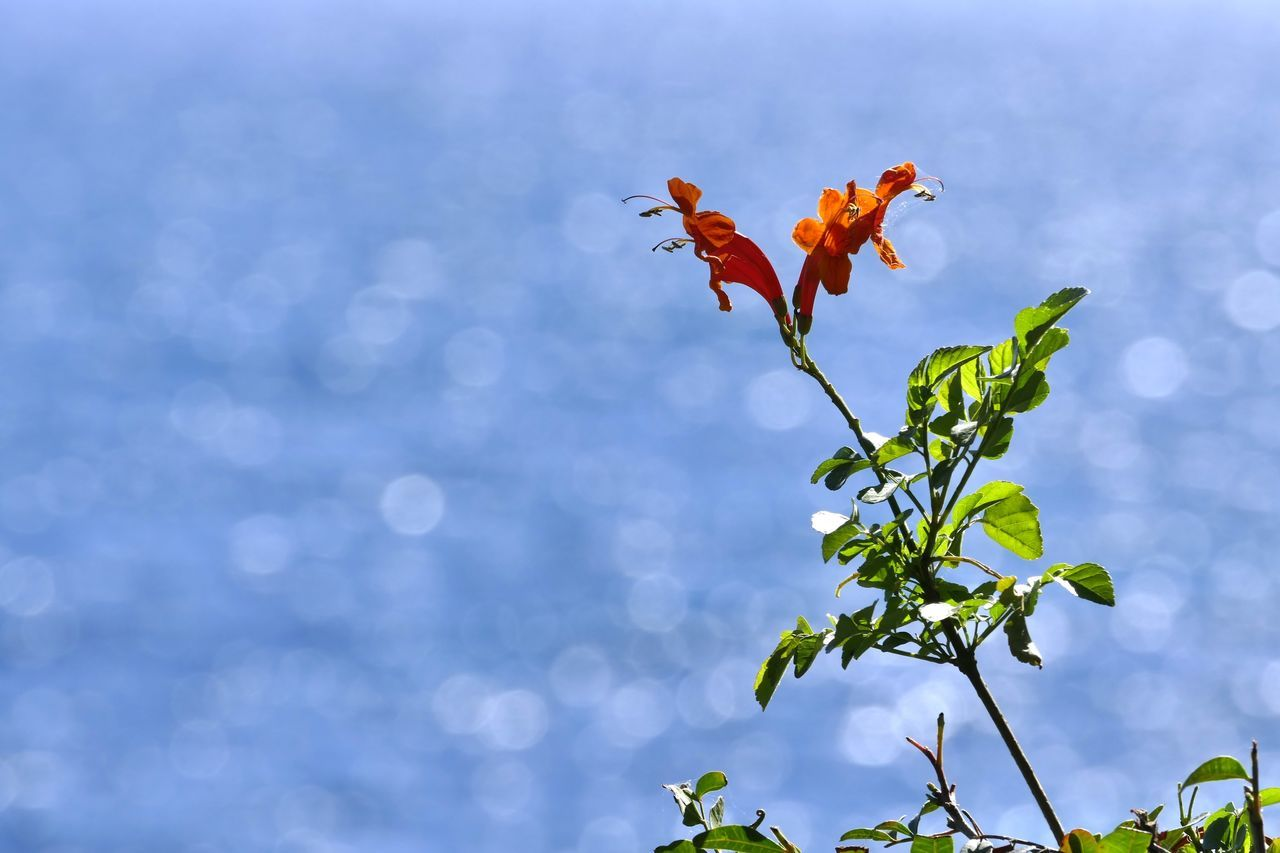 growth, nature, leaf, plant, flower, no people, beauty in nature, day, focus on foreground, outdoors, fragility, petal, freshness, close-up, flower head, sky