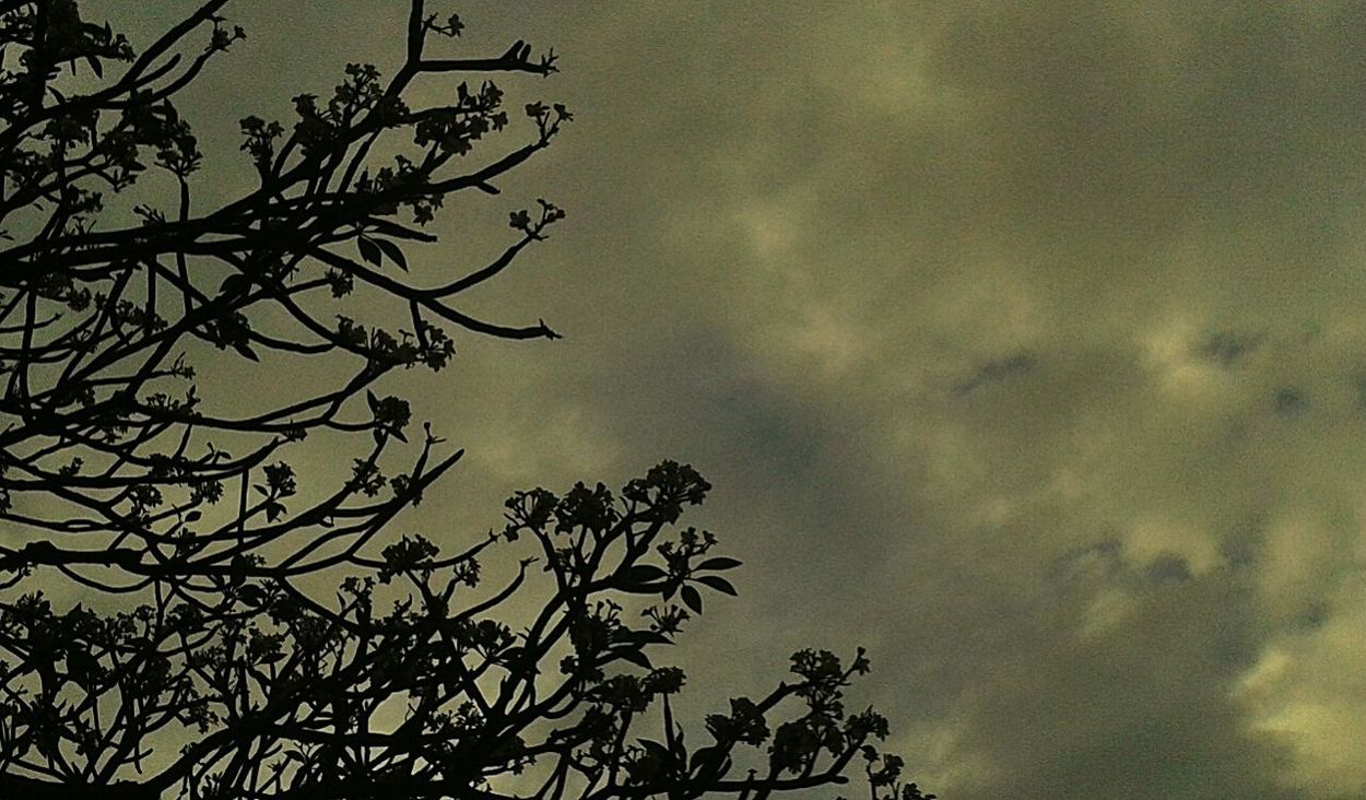 back to Negative Space / Silhouette photography .... Relaxing Flowertree Rainy Skies Warmth Eye4photography  EyeEm Nature Lover