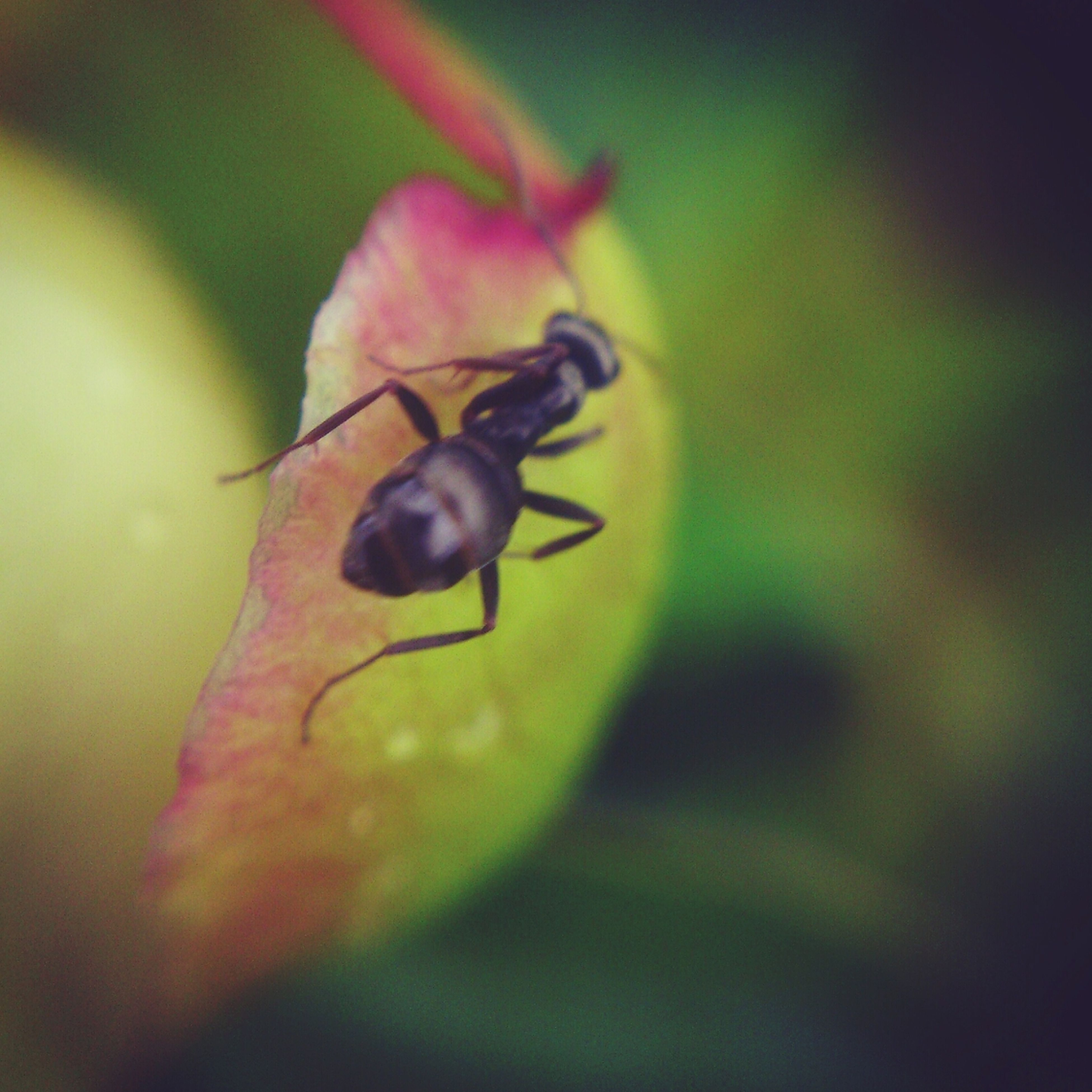 one animal, animal themes, insect, animals in the wild, wildlife, close-up, focus on foreground, selective focus, nature, leaf, beauty in nature, day, outdoors, no people, plant, green color, growth, zoology, full length, perching