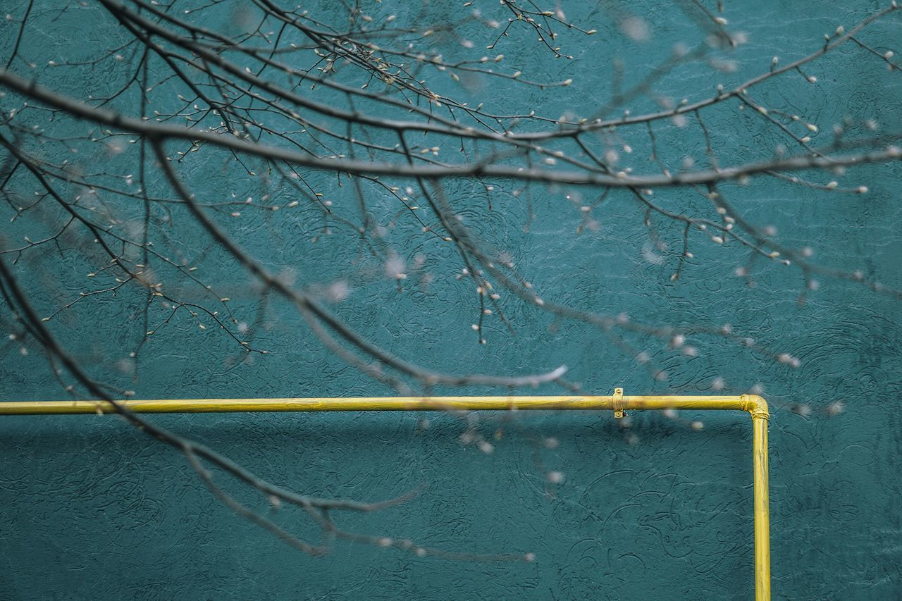 Wall Branches No People Outdoors Backgrounds Minimal Minimalism Minimalobsession Taking Photos Spring EyeEm Gallery Nature Beauty In Nature Façade Blue Blooming