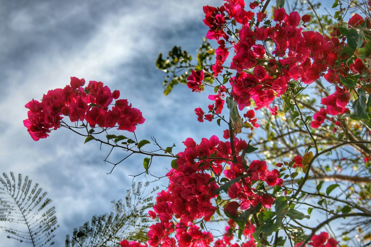 Low Angle View Of Red Flowers Blooming Against Sky