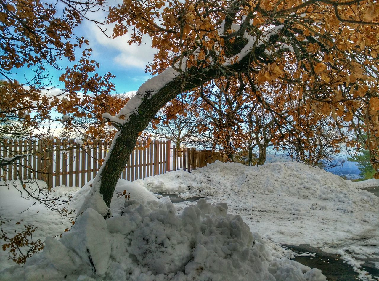 tree, nature, snow, winter, outdoors, beauty in nature, cold temperature, no people, day, branch, tranquility, scenics, sky