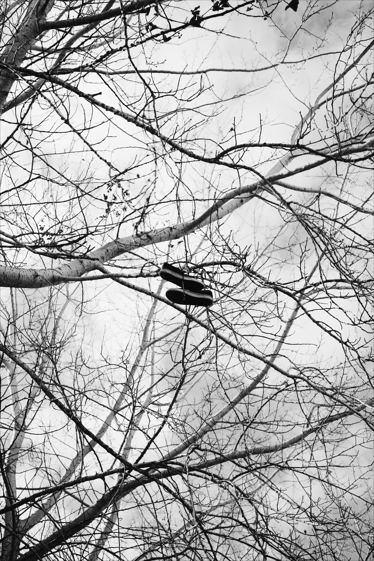 Branch Backgrounds Nature Low Angle View Bare Tree No People Flower Beauty In Nature Outdoors Day Blackandwhite Shoes Snickers The Street Photographer - 2017 EyeEm Awards