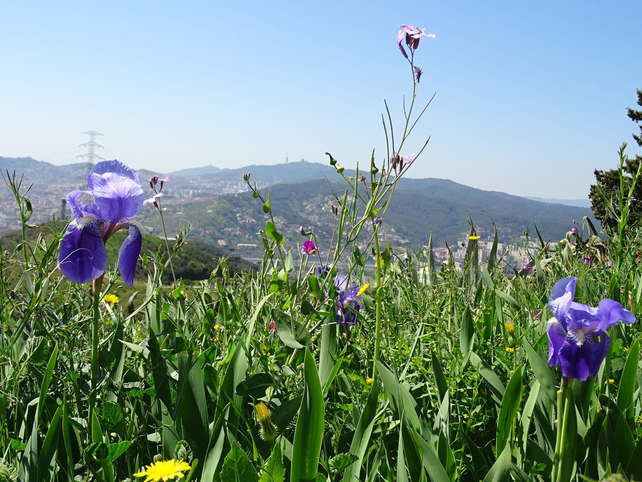 Lilies Beauty In Nature Day Flower Lilies Mid-air Mountain Nature No People Outdoors Plant Sky