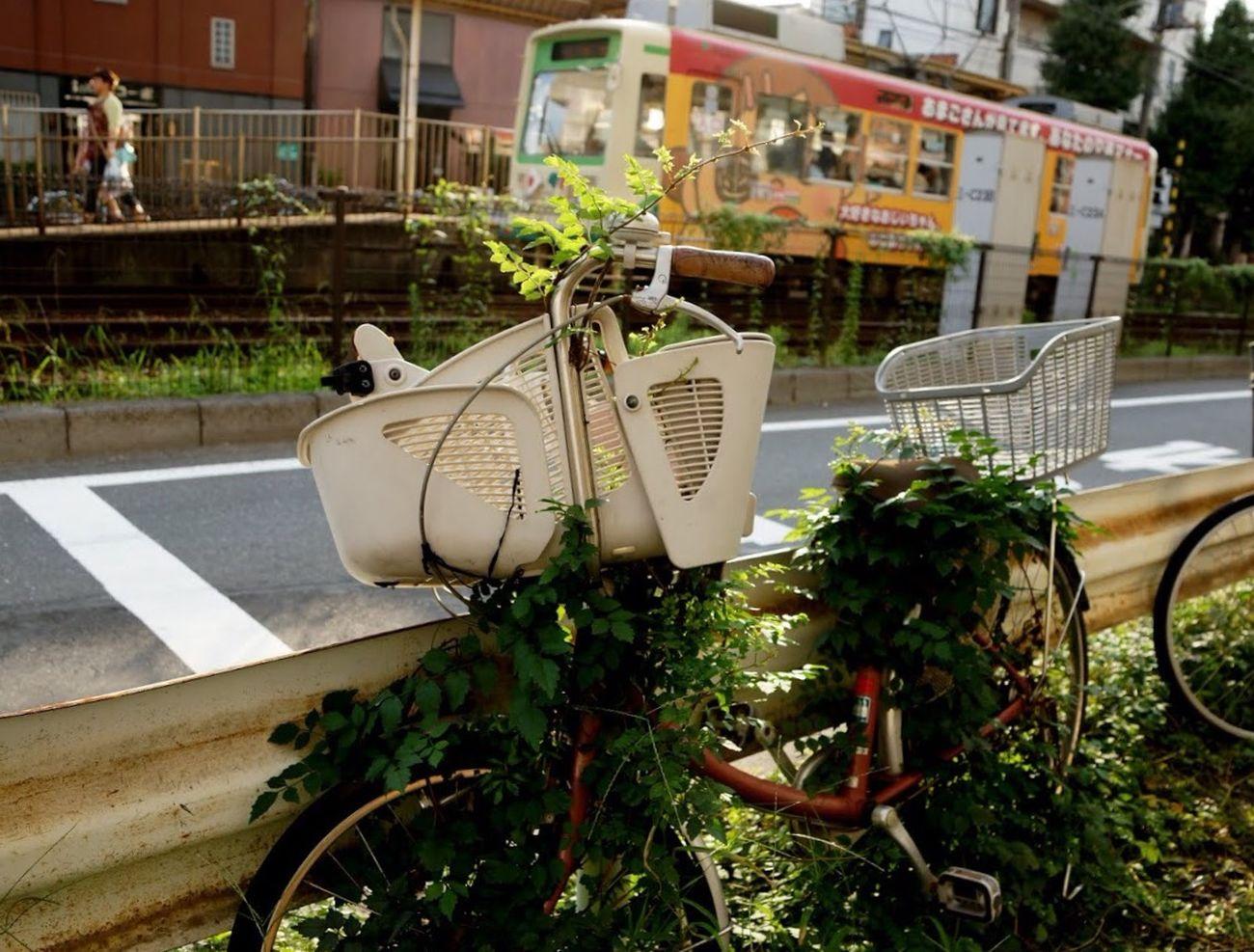 野生化。 自転車