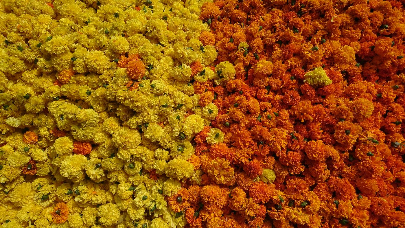 Festive Feast Orange Color Yellow Vivid Colours  Flowers Flower Bed Petals In Yellow And Orange. Freshness Outdoors XPERIA Xperia XZ. Sony Xperia Indian Culture  Indian Festival Indian Style
