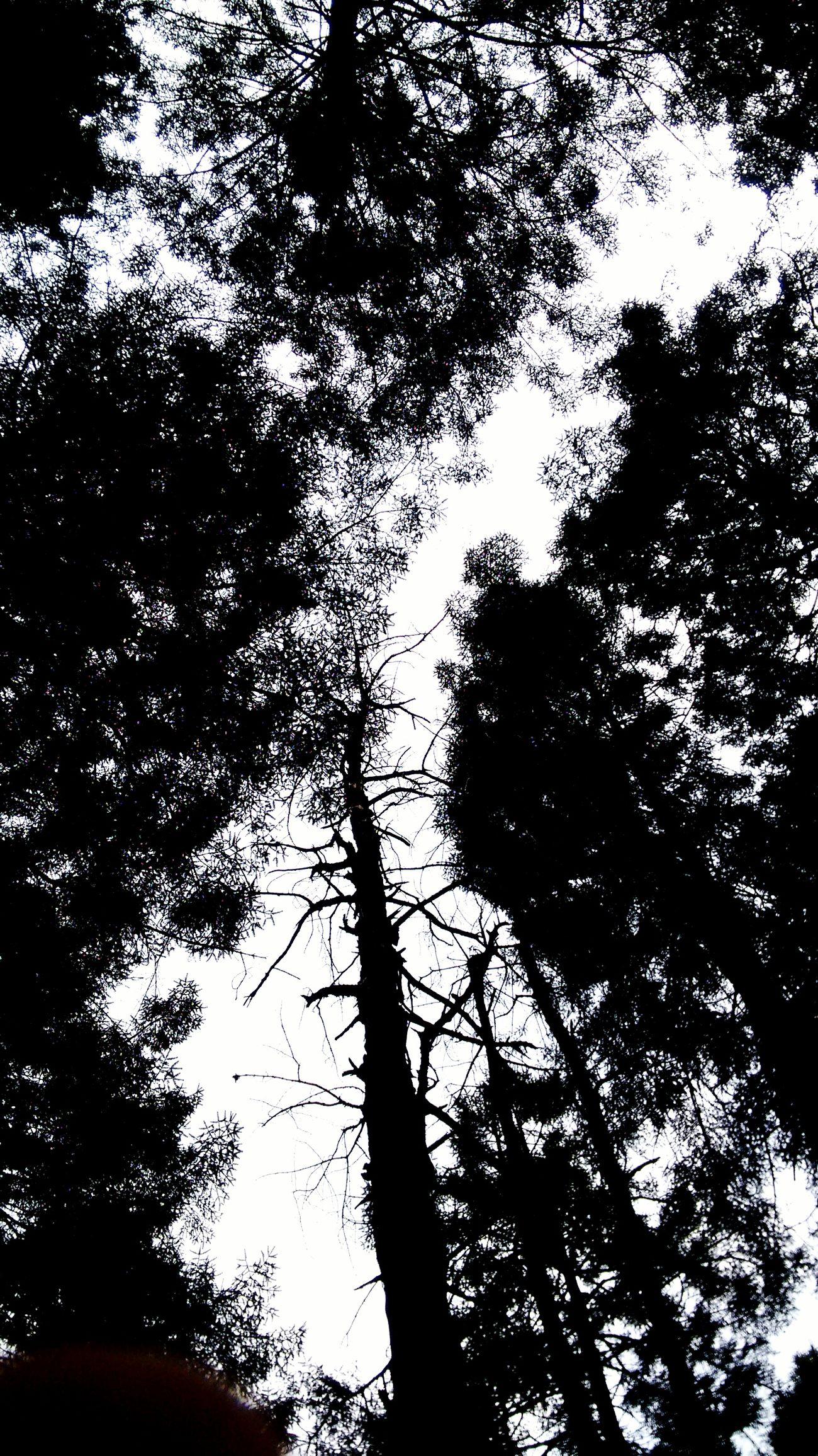 Alucination LSD Hofmann Viaje Psicodelic TRYPTpic Trip Photos Galaxy Space Day Astronomy Beauty Sky Blue Beauty In Nature Nature Atardecerporelmundo Cloud - Sky Hello World Bosque Encantado Bosque Negro Bosque Y Vida