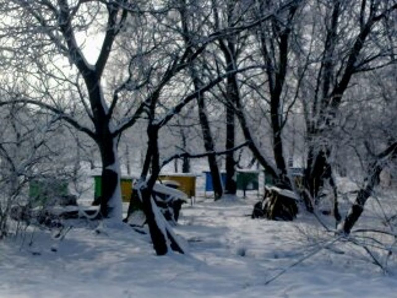 winter, snow, cold temperature, nature, outdoors, bare tree, no people, day, tree, beauty in nature