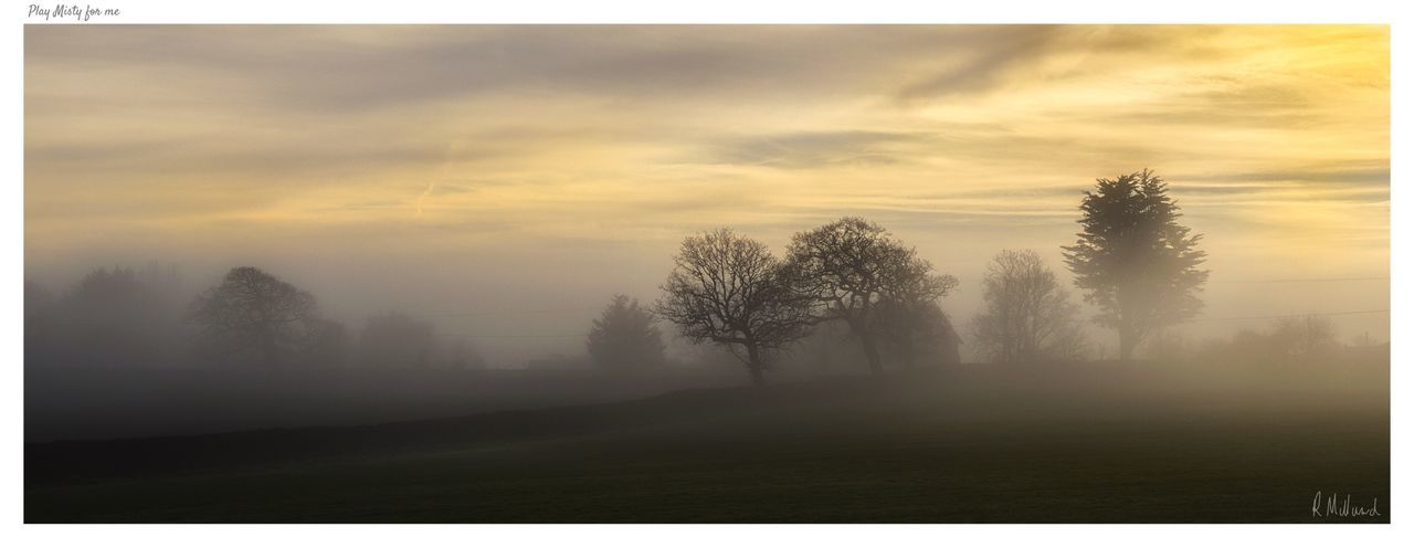 Play Misty for Me Tree Nature Landscape Tranquility Sky Tranquil Scene Field Beauty In Nature No People Scenics Fog Outdoors Hazy  Day Isle Of Wight  Foggy Morning Beauty In Nature