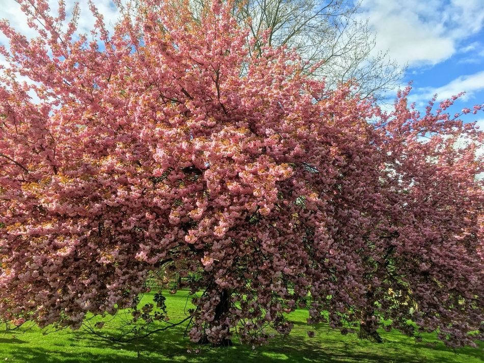 Tree Flower Blossom Springtime Growth Beauty In Nature Nature Fragility No People Pink Color Blooming