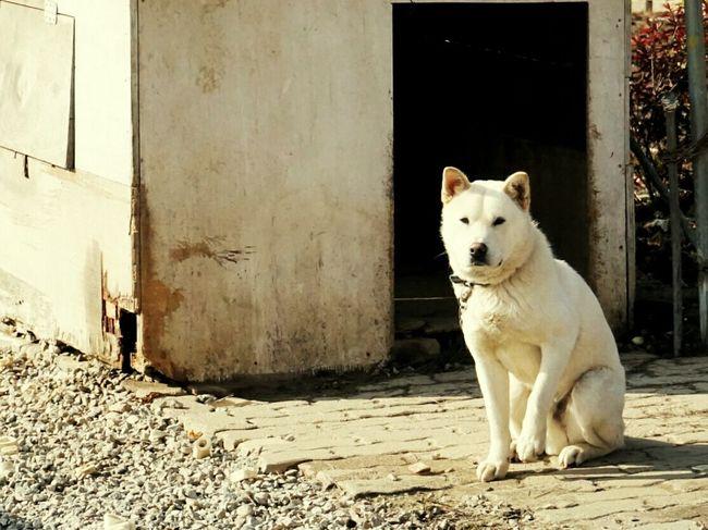 강아지 Animal Dogs