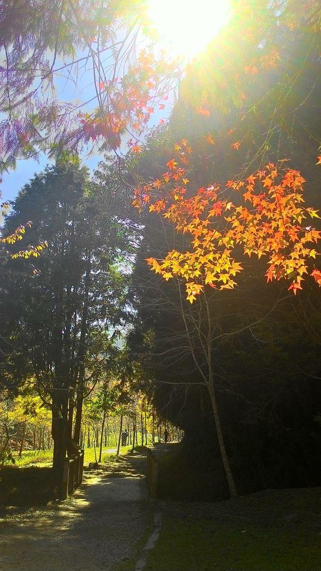 more beautiful leaves,more ha Enjoying Lifeppy