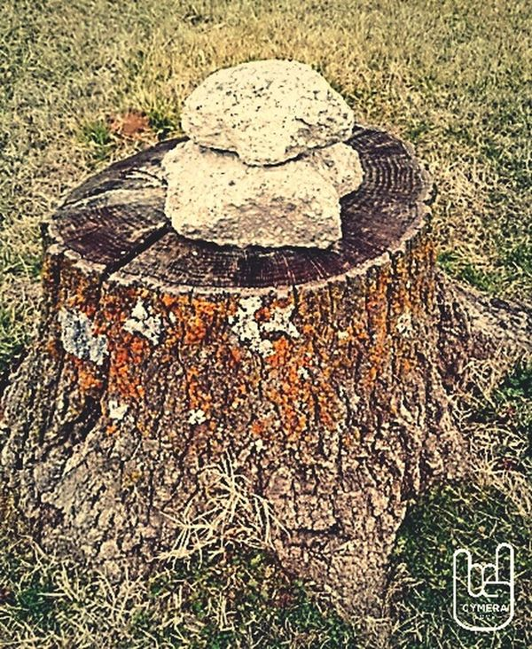 TreePorn Tree Stumps Trees And Rocks Gloomy Day Missing Him :( Walking Around The City  Taking Photos Smartphonephotography Mylifebelike My Wall :) Homeless Before Homeless No More Lonely Tree Loner Sad & Lonely
