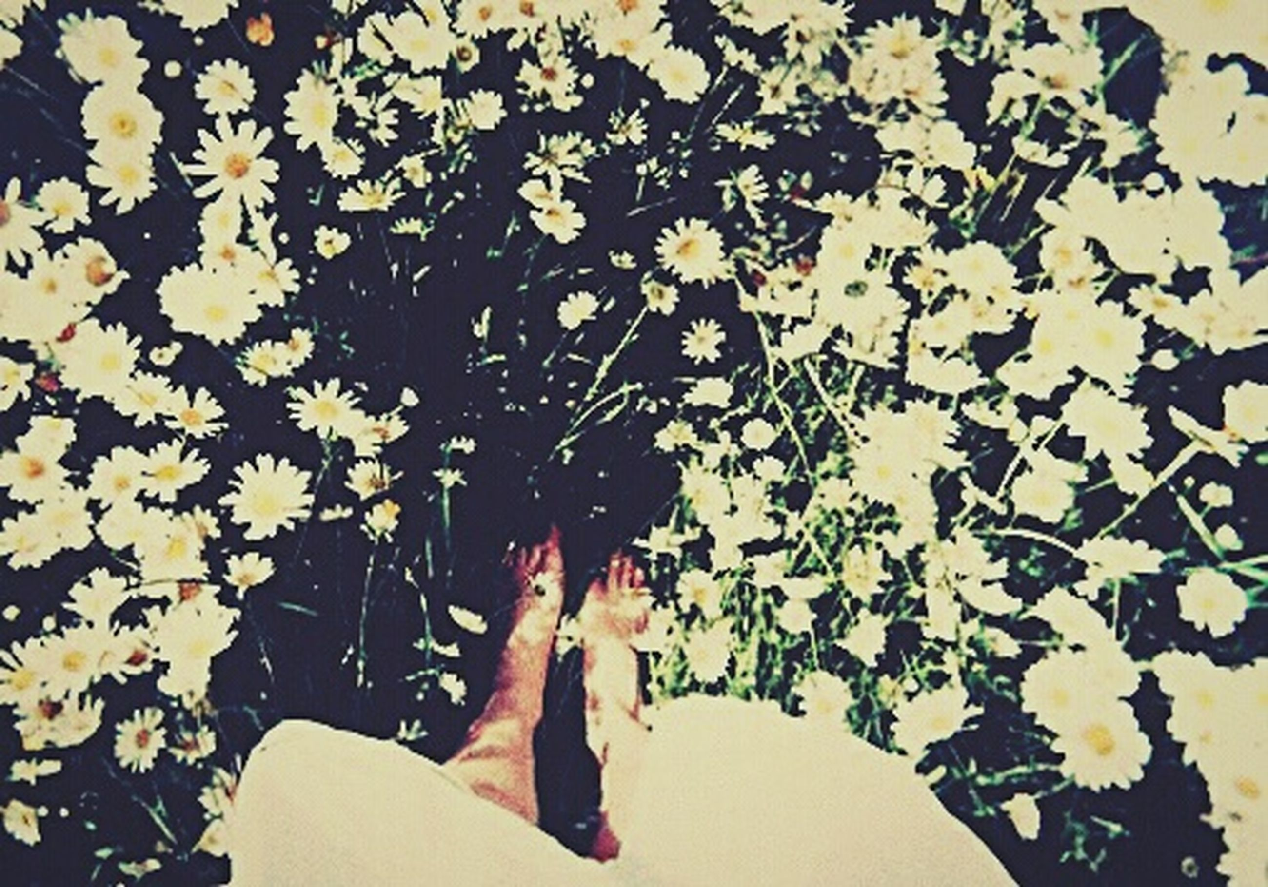 low section, lifestyles, person, personal perspective, leisure activity, high angle view, leaf, flower, standing, human foot, sunlight, plant, relaxation, nature, day, barefoot