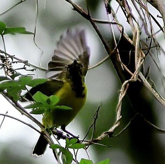 Hello everybody... Birds Birding Birdofinstagram Birdporn Birdphotography Bird_of_instagram Best_birds Best_nature Ig_birds