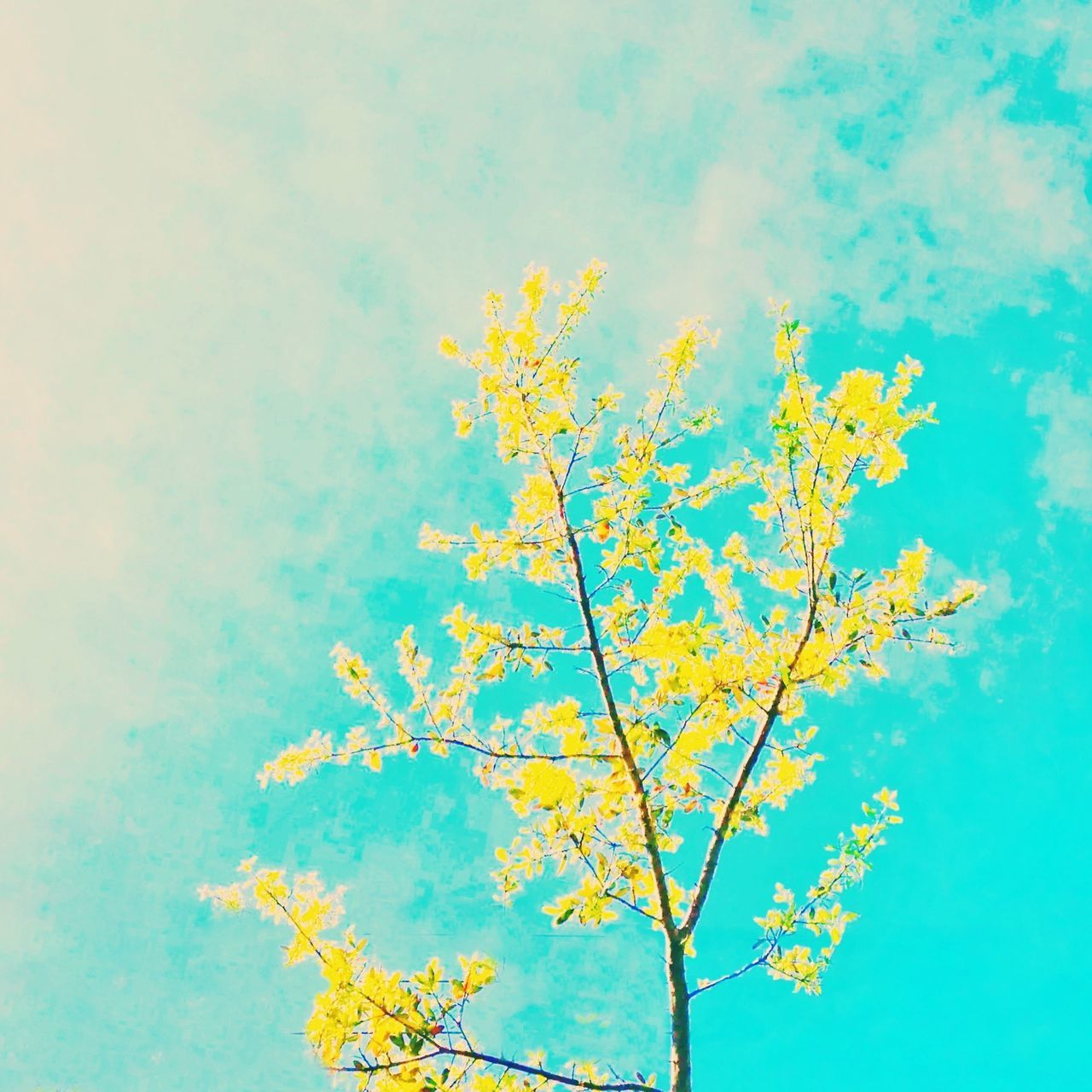 yellow, nature, growth, beauty in nature, low angle view, day, flower, tranquility, no people, sky, outdoors, autumn, tree, freshness, fragility, close-up