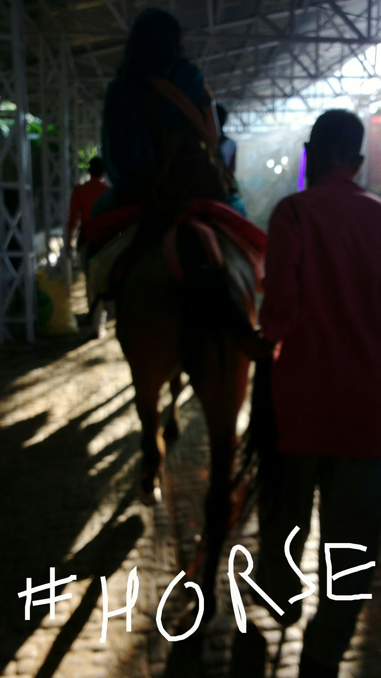 Capture The Moment Year Of The Horse