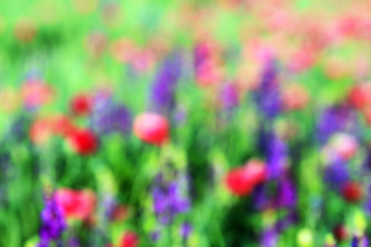 multi colored, colorful, vibrant color, focus on foreground, no people, green color, backgrounds, day, nature, growth, outdoors, close-up, beauty in nature, defocused, flower, freshness
