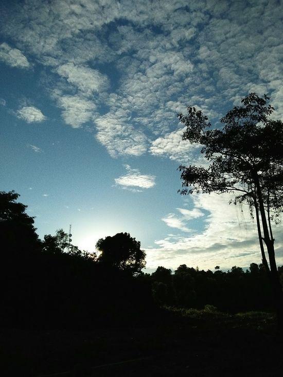 Awanbiru INDONESIA Pohondanlangit Trees And Sky Anissa Sky likeforlike #likemyphoto #qlikemyphotos #like4like #likemypic #likeback #ilikeback #10likes #50likes #100likes 20likes likere ınstagram