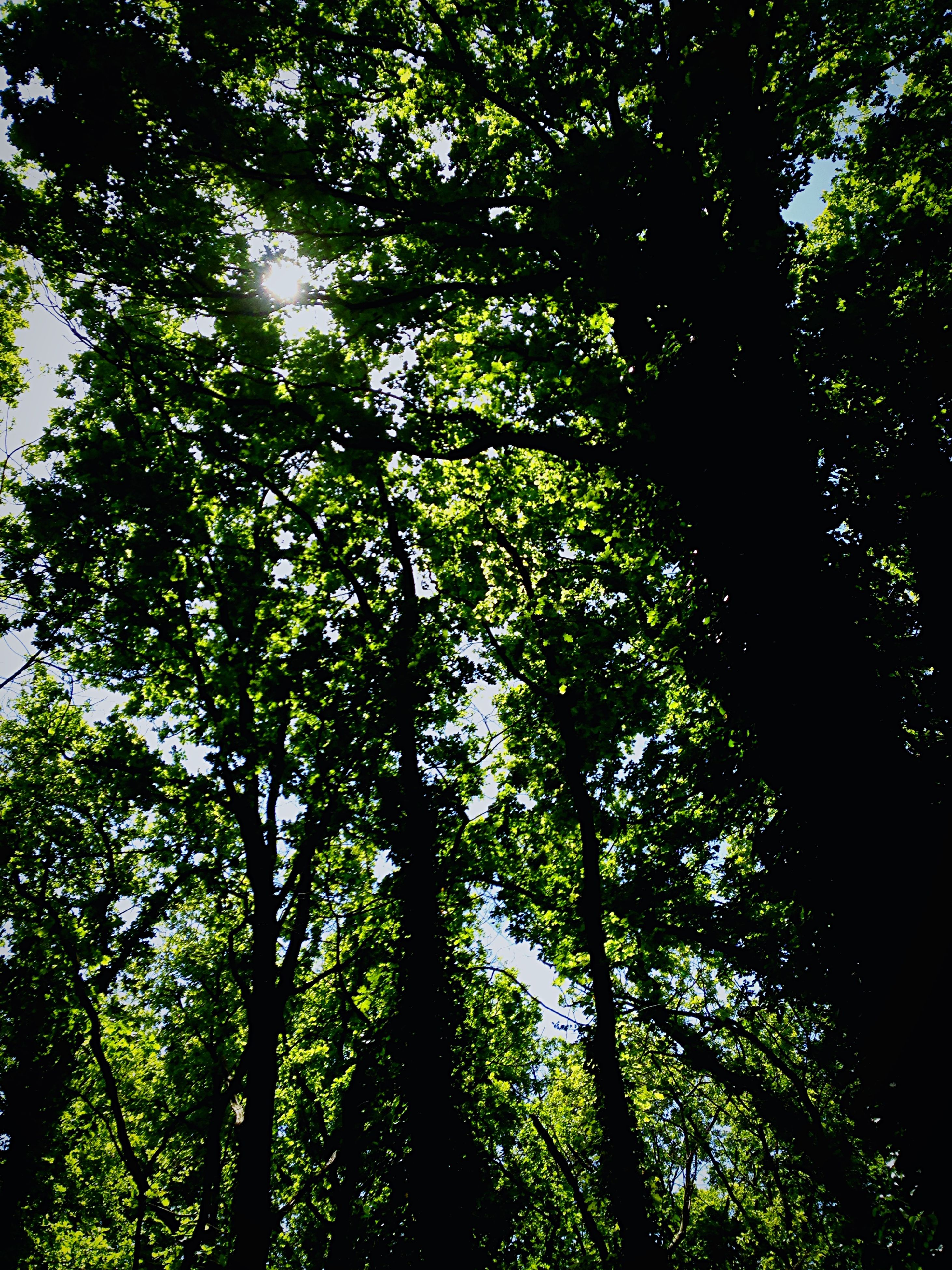 tree, low angle view, growth, branch, tranquility, forest, nature, green color, beauty in nature, lush foliage, tranquil scene, scenics, tree trunk, woodland, outdoors, backgrounds, day, no people, full frame, sky