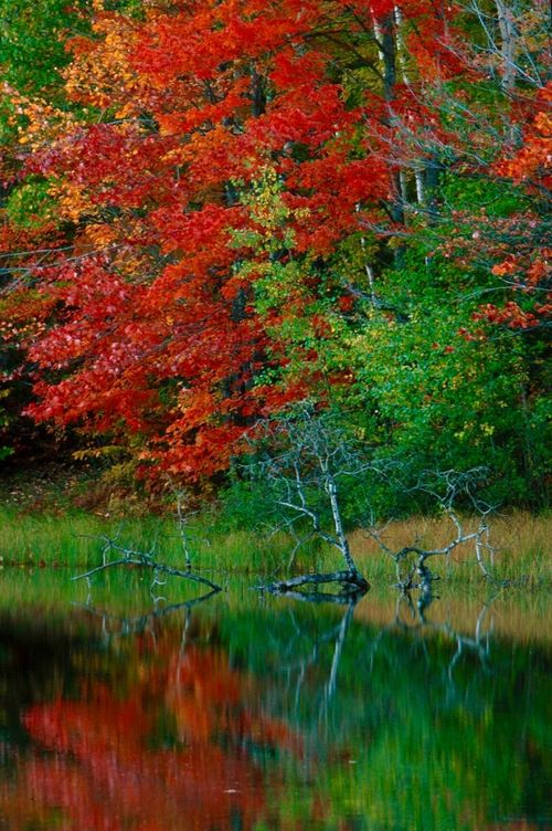 Day Fall Colors Grass Landscape_Collection Landscape_photography Multi Colored Nature No People Outdoors Water Incredible Colors