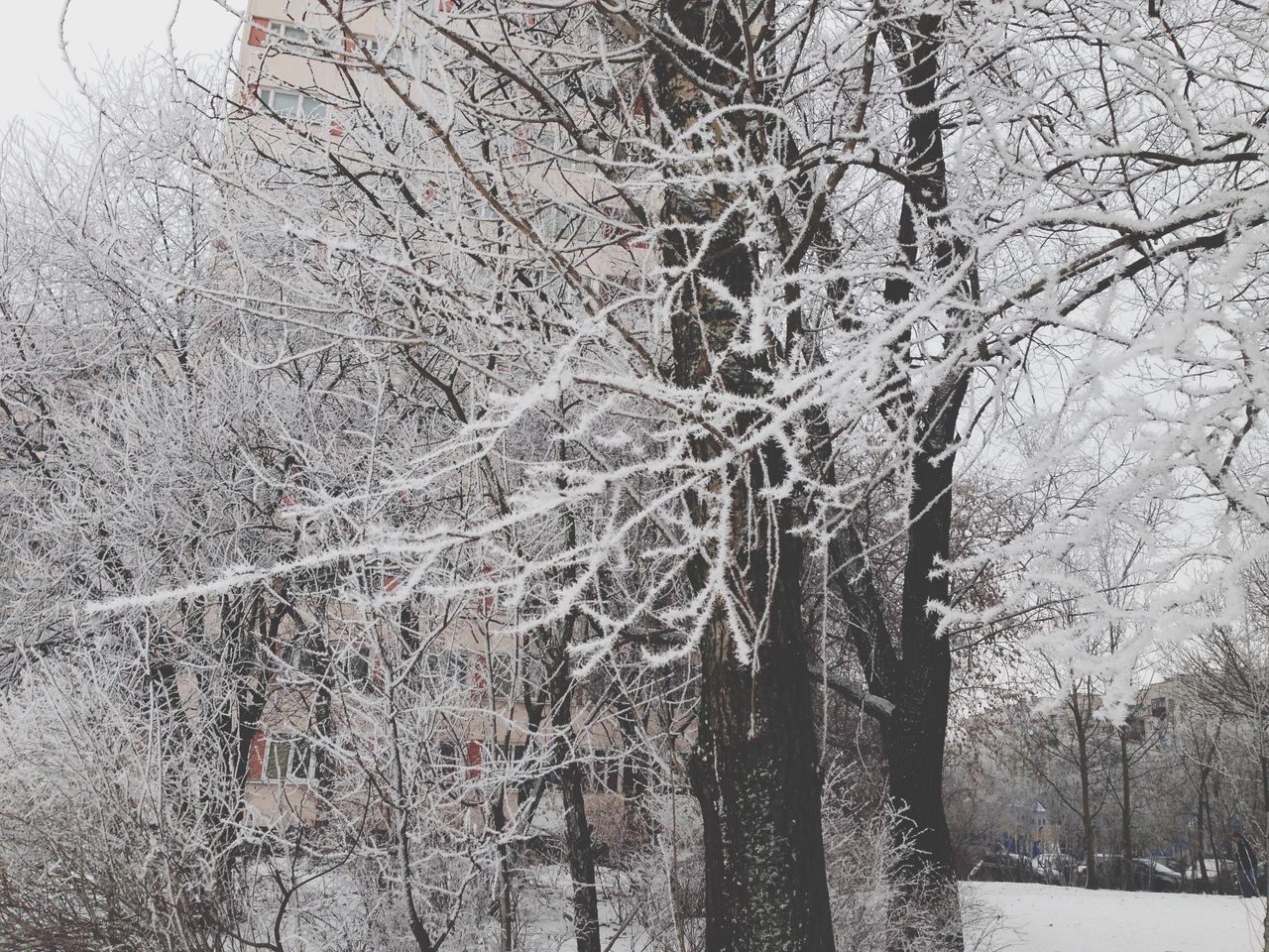 Tree Branch Low Angle View Winter No People Beauty In Nature Snow Hoarfrost White Bare Tree