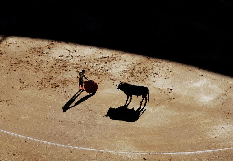 Black Color Bull Fight Bullfight Bullfight Arena Madrid Culture Madrid Spain Sevilla SPAIN Spanish Culture Stierkampf Stierkampfarena Torero  Toreros
