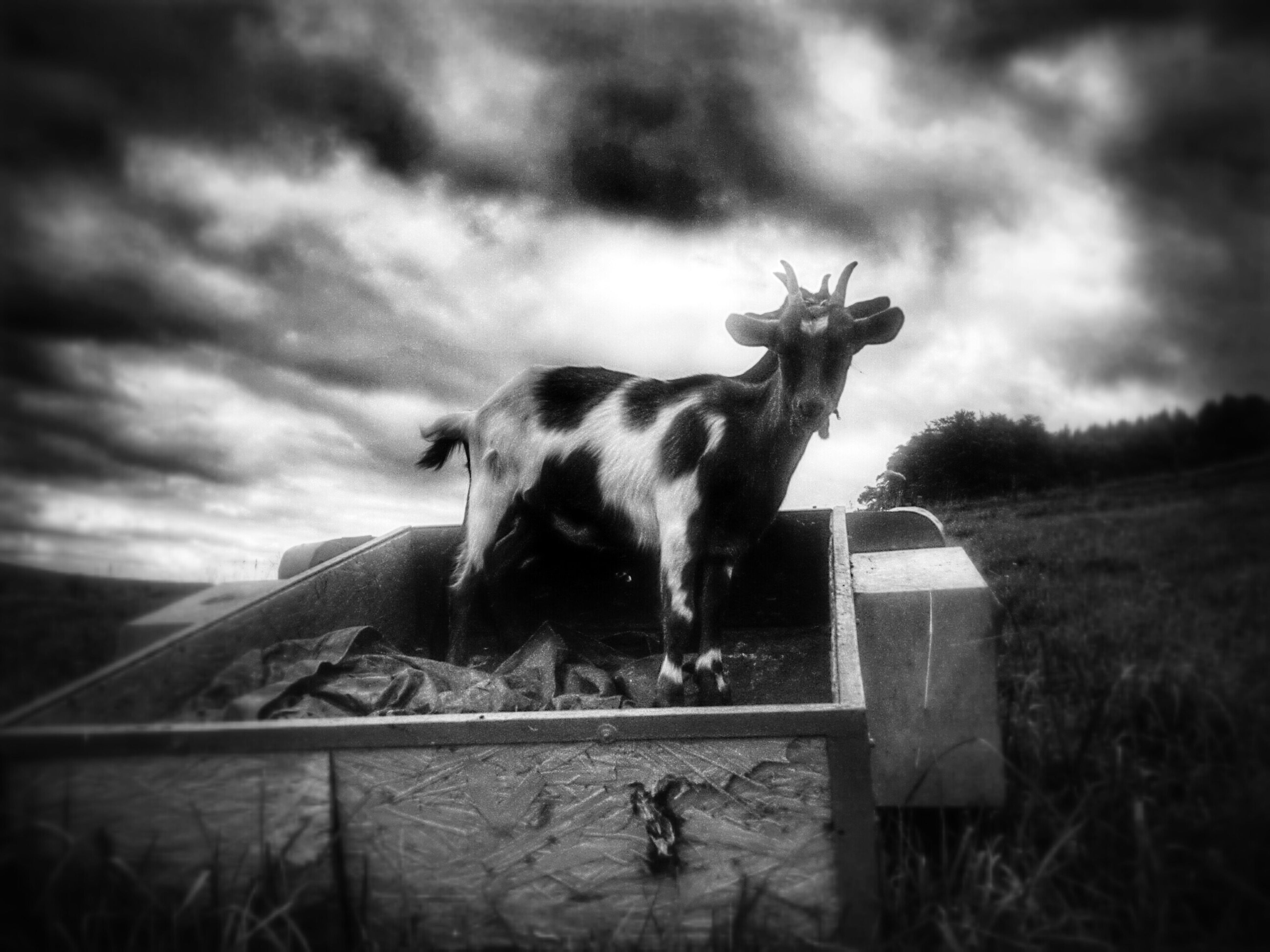 animal themes, one animal, sky, mammal, domestic animals, field, cloud - sky, cloudy, landscape, grass, cloud, day, nature, pets, horse, no people, fence, outdoors, grassy, focus on foreground