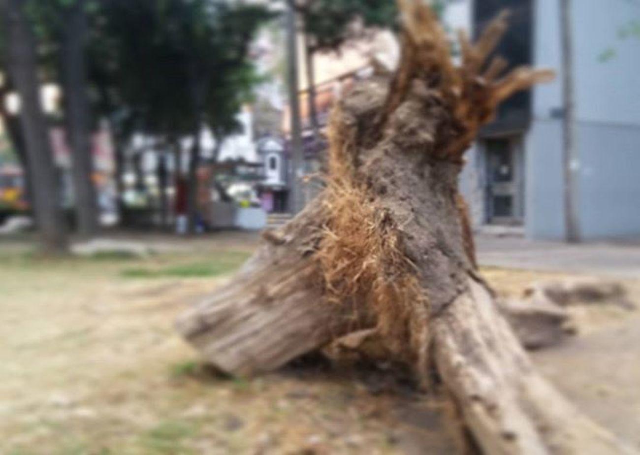 Nature Dead Calles En Ruinas Esto Es Mexico