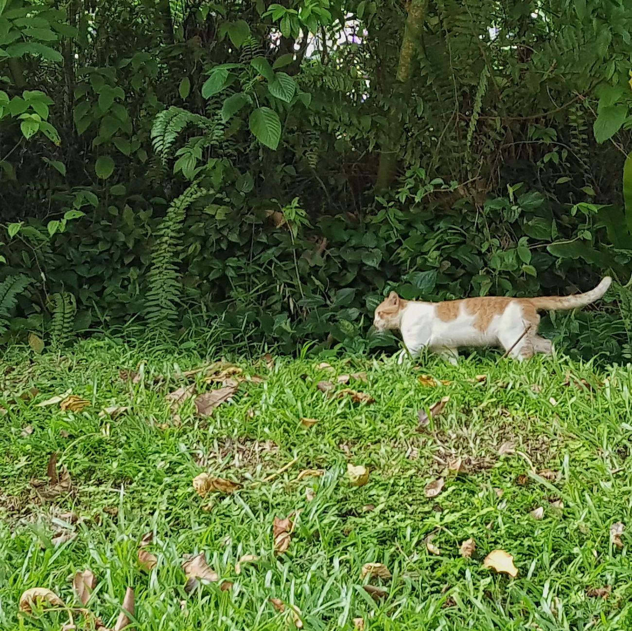 Cat Commonwealth Singapore