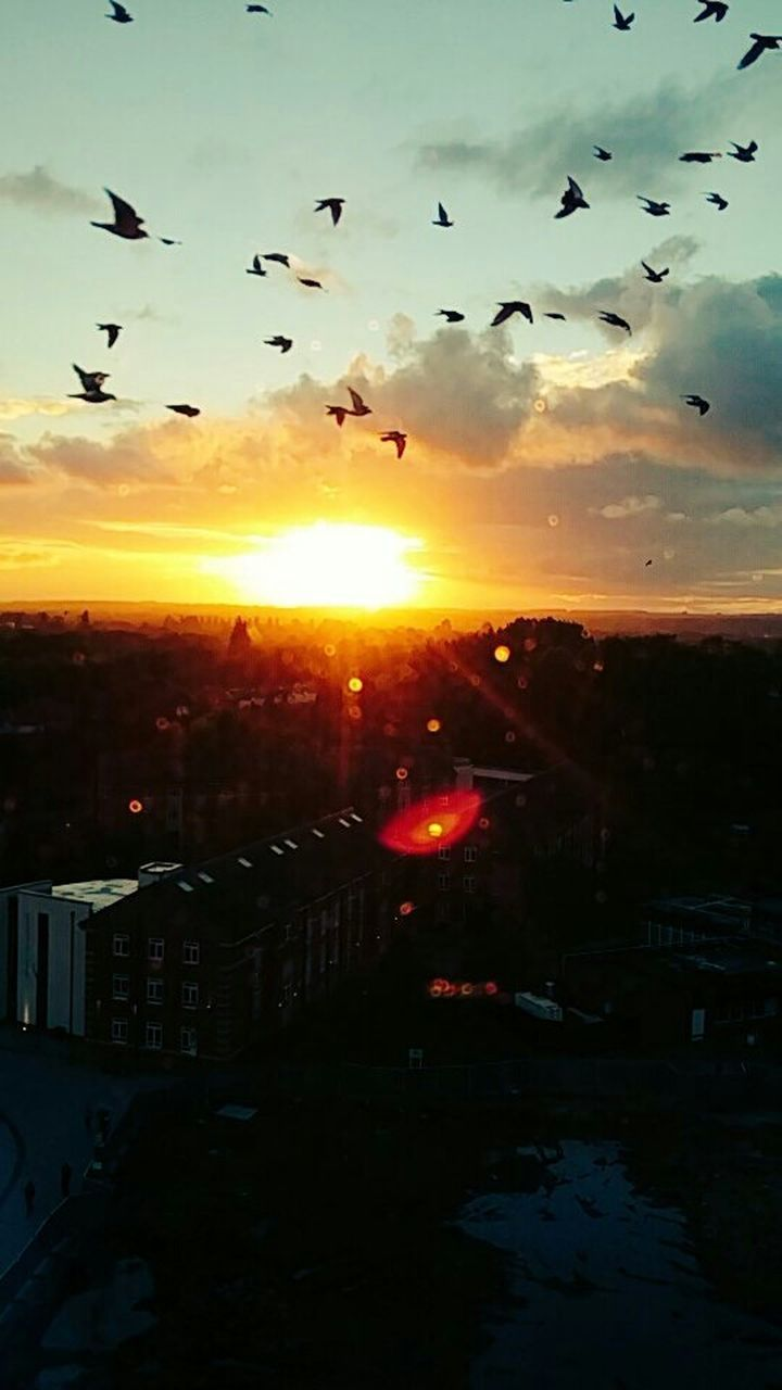 sunset, flying, bird, silhouette, sun, sky, large group of animals, nature, animal themes, flock of birds, no people, outdoors, animals in the wild, beauty in nature, building exterior, architecture, city