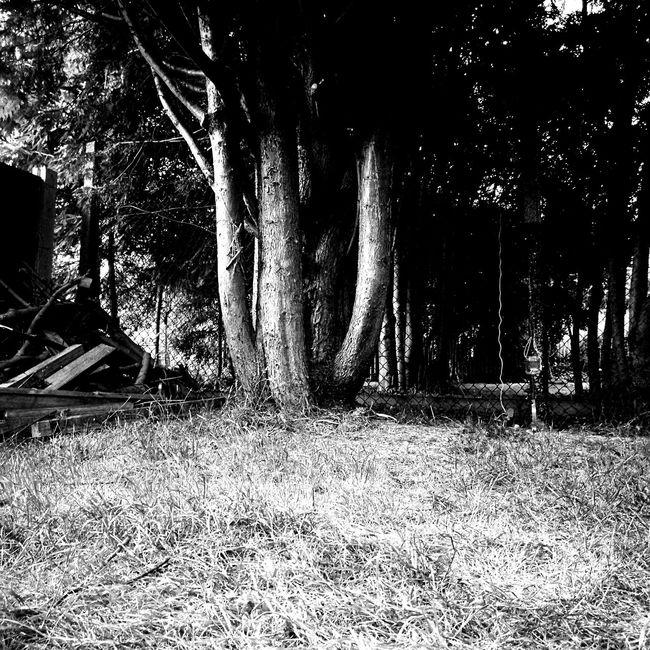 P9 Trees