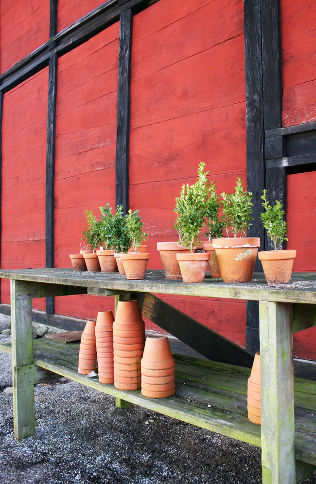 Jungs Buchsbäume in der Gärtnerei von Den Gamle By Aarhus Abundance Arrangement Beauty In Nature Box Claypots Close-up Day Dengamleby Fachwerk Green Green Color Growing Growth Half-timbered Leaf Nature No People Nursery Outdoors Plant Potted Plant Red Side By Side