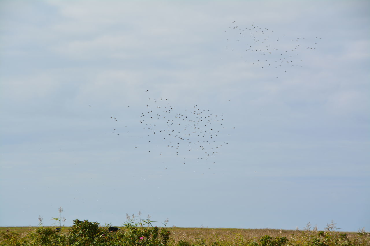 Flock Of Birds Flying Over Field
