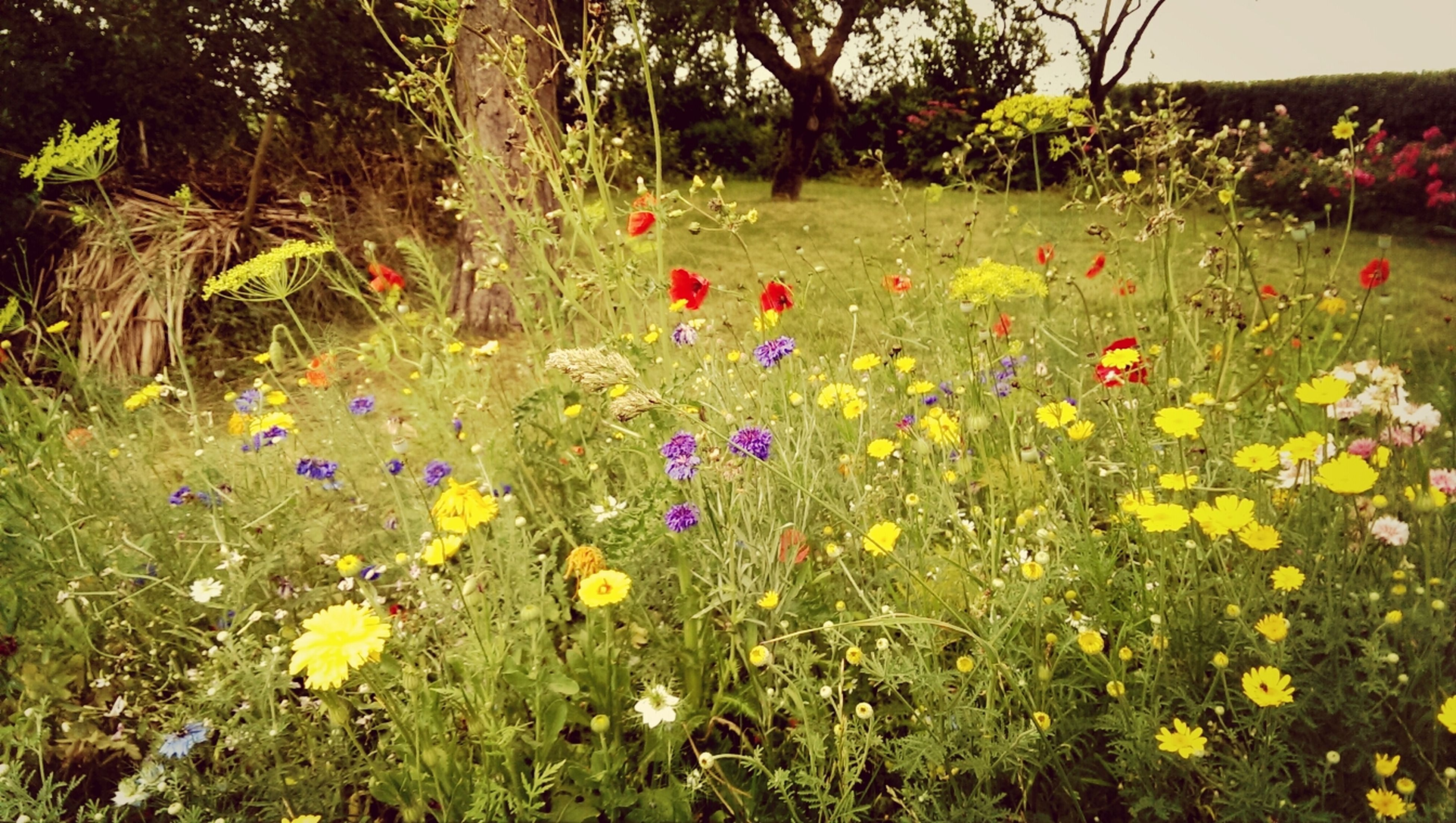 flower, growth, freshness, beauty in nature, plant, field, fragility, blooming, nature, grass, in bloom, petal, green color, tranquility, tree, tranquil scene, multi colored, landscape, yellow, wildflower