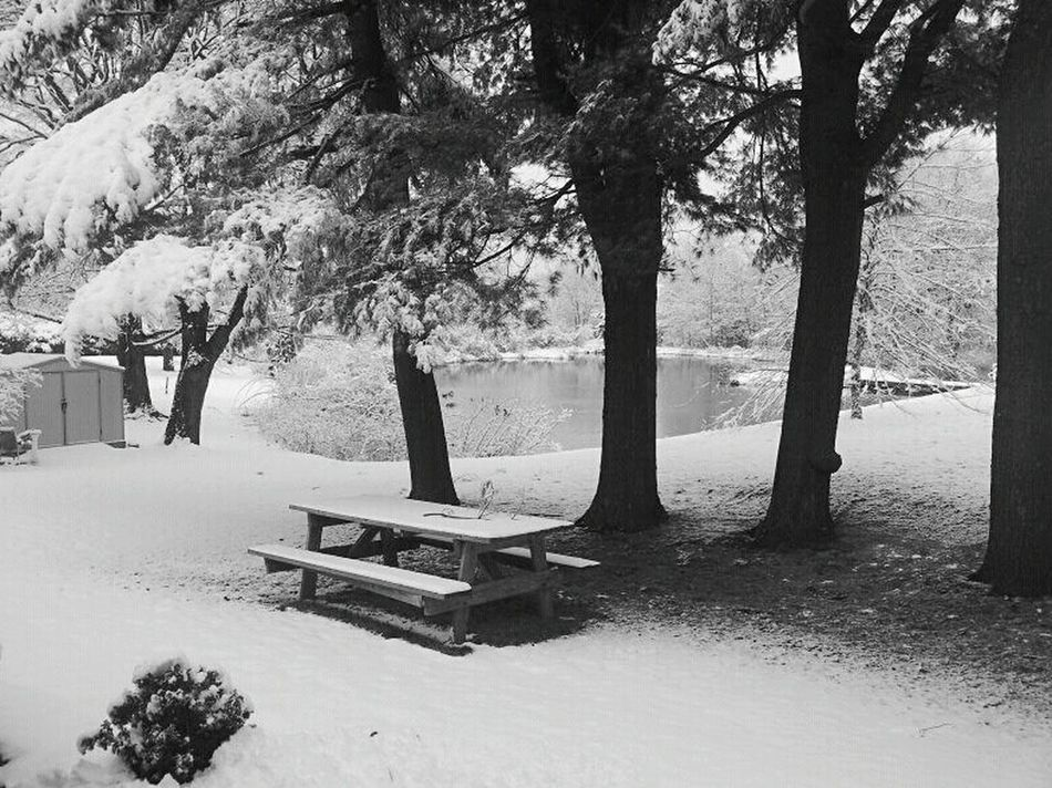Picnic In Snow Snow Snowy Trees Snowy Scene Picnic Table Icy Ponds Snowy Ground